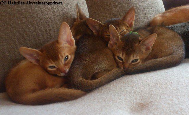 Fire av kattungene slapper av i sofaen :)