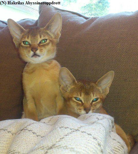 (N) Hakrilas Emil og Enzo 12 uker gamle :)