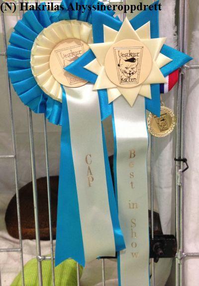 CAP-sløyfen, NOM-medaljen og BIS-sløyfen som Estilo fikk 23.08.2014 :)