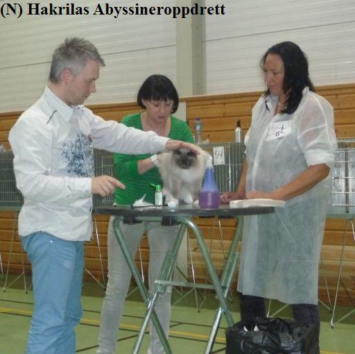 Den kjempefine ragdollhunnkatten (Solstråle) til min rasekattvenninne Anne Grete :)