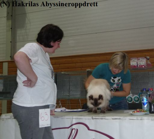 Min rasekatt venninne Lena med ragdollhannkatten sin GIC Love Miracle Lion Delicious på dommerbordet til sin grunnbedømmelse :)