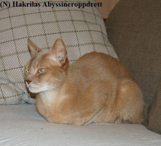Godpusegutten Aros slapper av i sofaen <3 :)