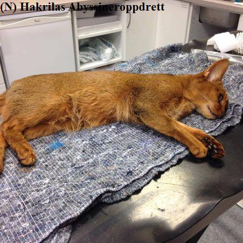 130715_nadina_veterinaer1a