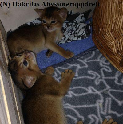 150216_felix_felicia_kattungebingen2