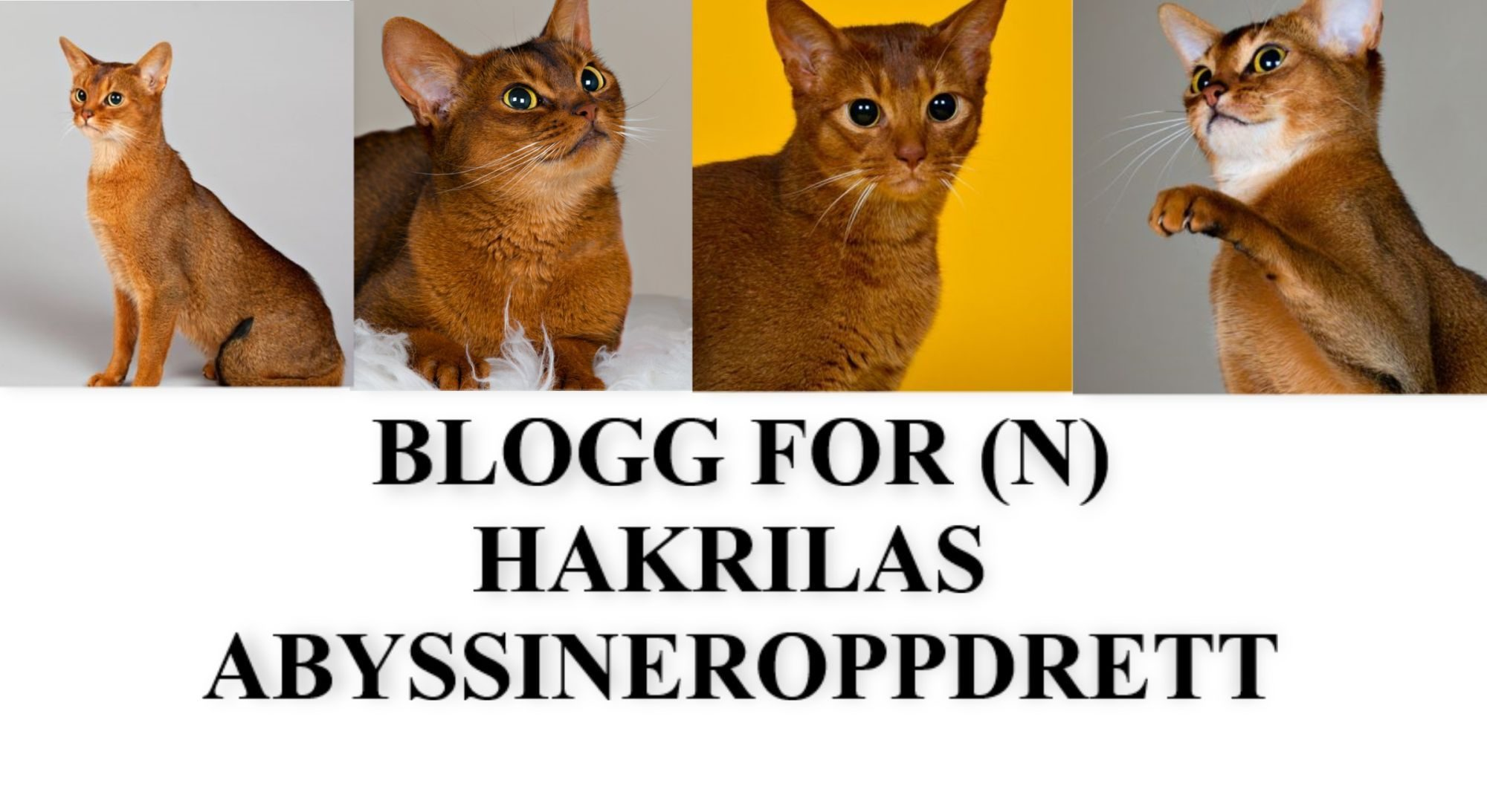 BLOGG FOR